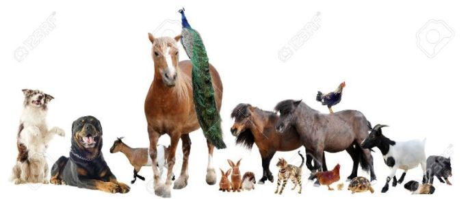 15498056-group-of-farm-animals-in-front-of-white-background-Stock-Photo.jpg