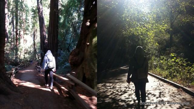 Muir Woods3.jpg