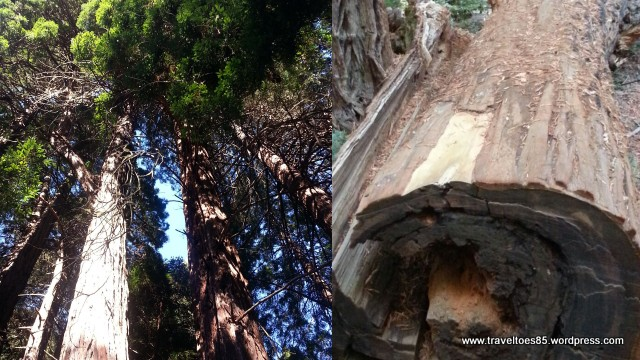 Muir Woods5.jpg