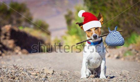 stock-photo-jack-russell-dog-abandoned-and-left-alone-on-the-road-with-santa-hat-on-christmas-holidays-342808985.jpg