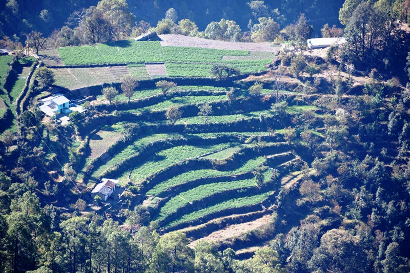 Terrace Farming.JPG